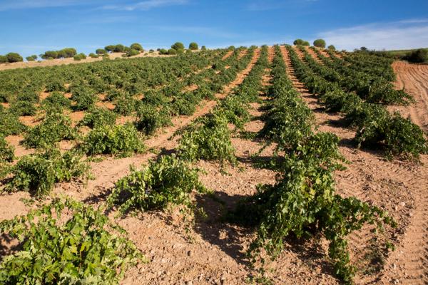 Visita viñedo didáctico