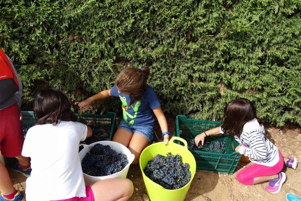 A por uvas